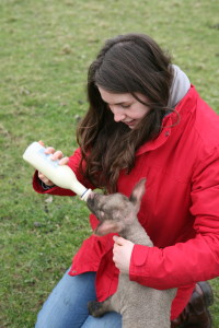 In my elements...Helping to hand rear a lamb on the farm
