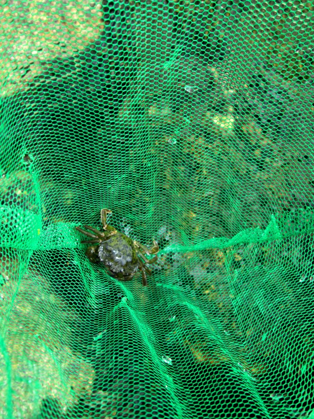 Crabbing5
