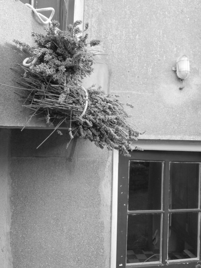 Lavender by Door