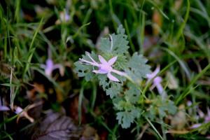 Flower on Nettle