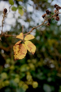 Yellow the Colour of Autumn
