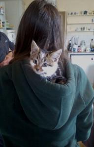 kitty in a hood